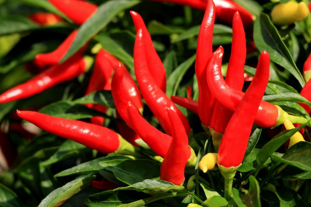 The Wonders of Cayenne Pepper