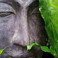 Thai Cuisine – A Natural Healer?